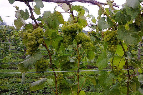 Lovels Wine (1).png