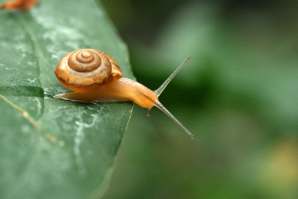 smallish adventure snail