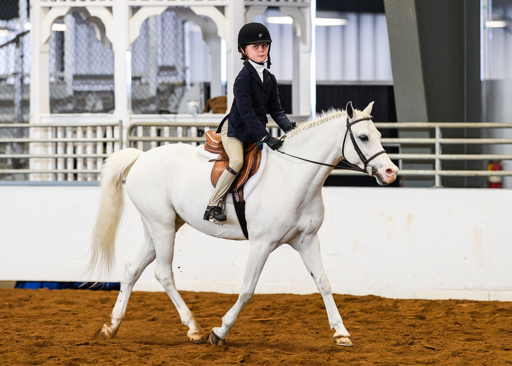 Molly Gfroerer and Top Hat trotted to two Short Stirrup championships.