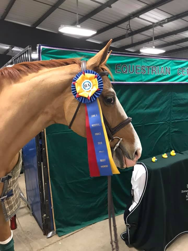 Winston was named best horse of the day for Regionals!