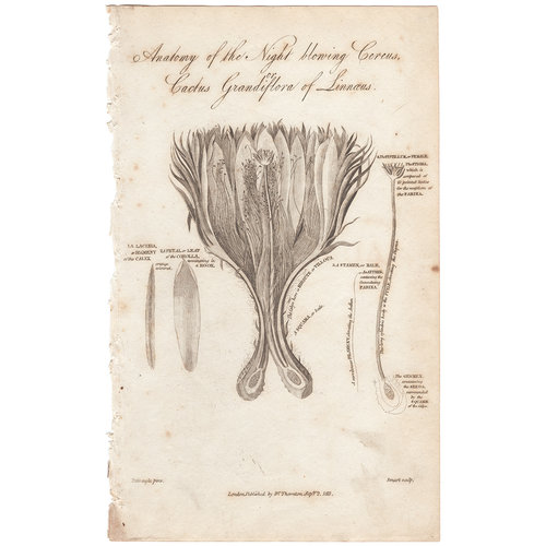 Thornton Plate 37 Anatomy of the Night Blowing Cereus, or Cactus ...