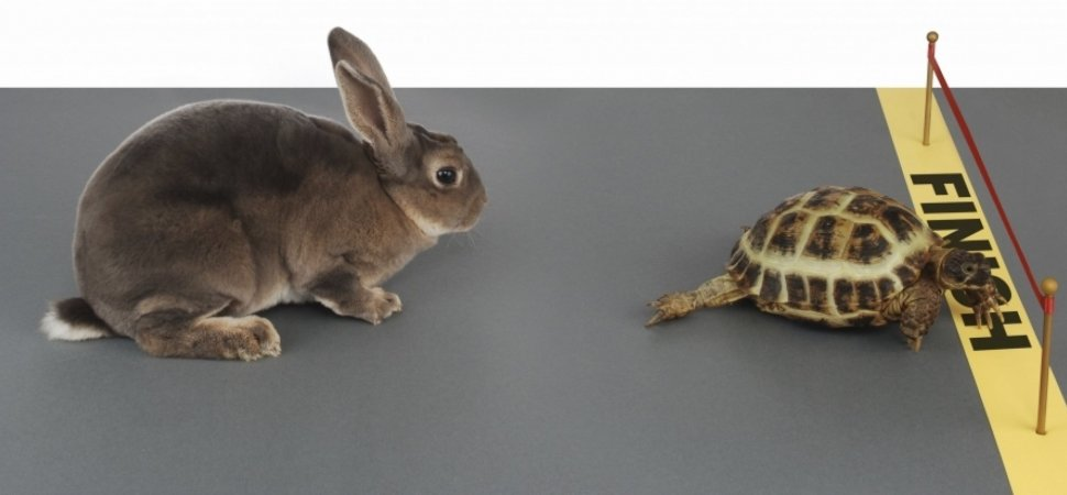 tortoise and hare.jpg