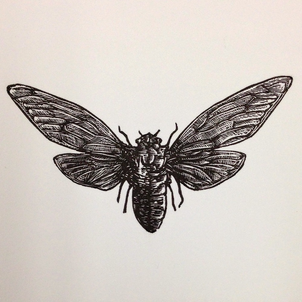 Final print of the Cicada.