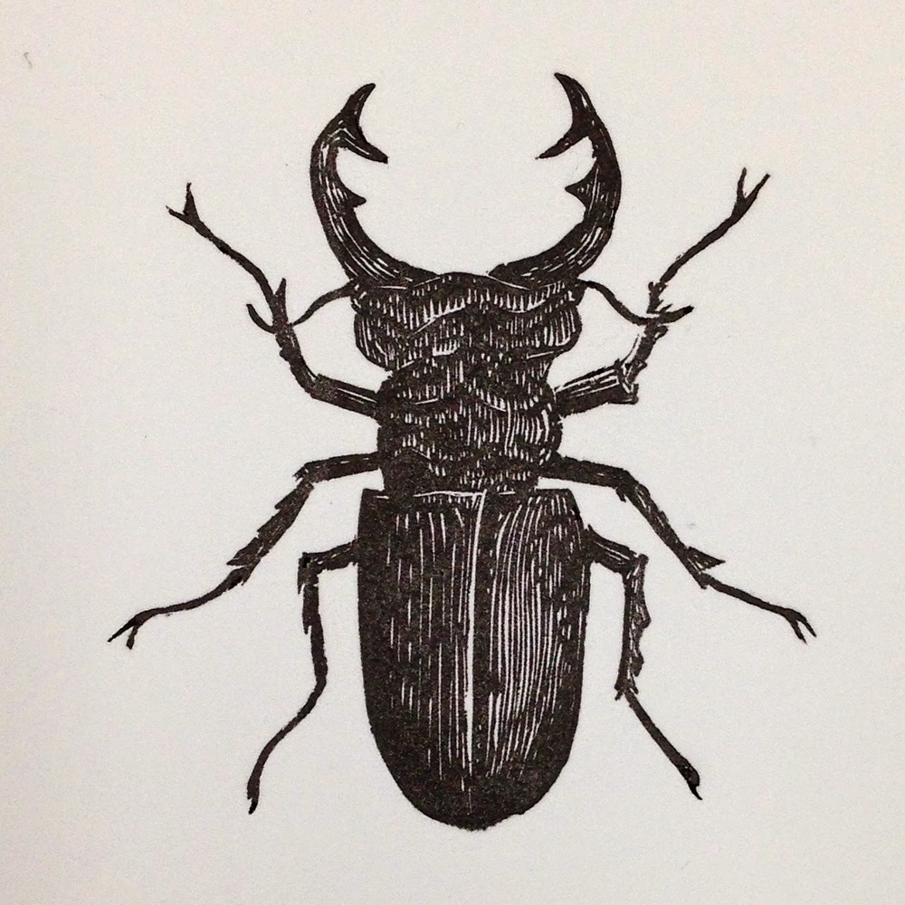 Final print of the Stag Beetle.