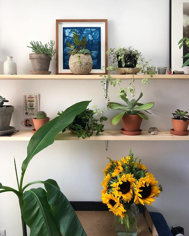 🌻 steeped in sunflowers🌻 thank you dear friends and family for birthday and get well soon messages this week. The arrival of new blooms and post got me up and slowly going again 🙏 Here's a #shelfie in appreciation x