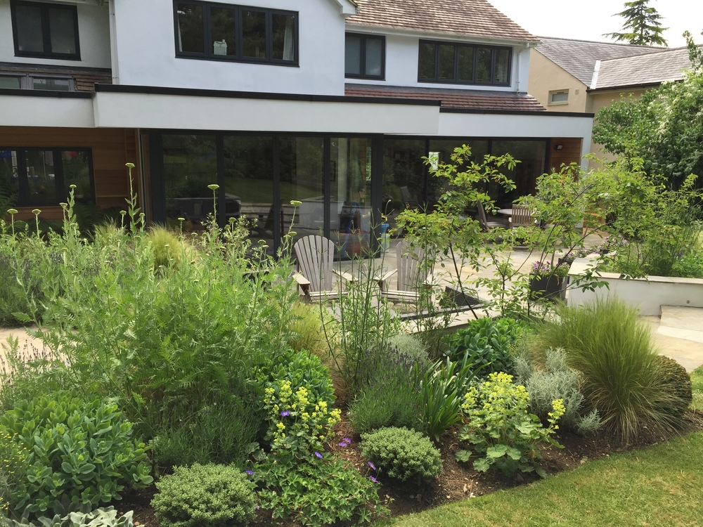 planting in front of this stunning extension in its 2nd season