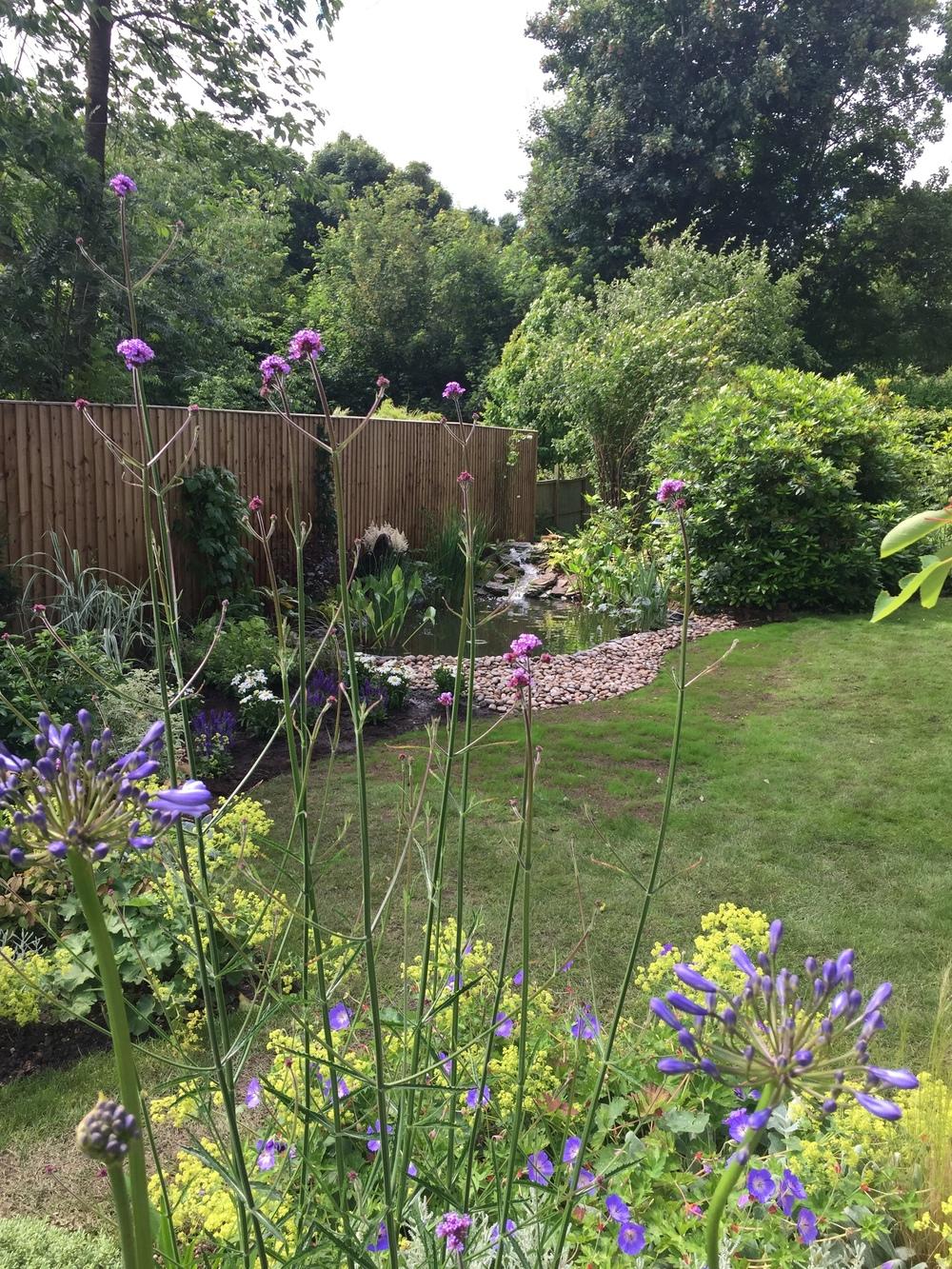 New pond build Berkhamsted