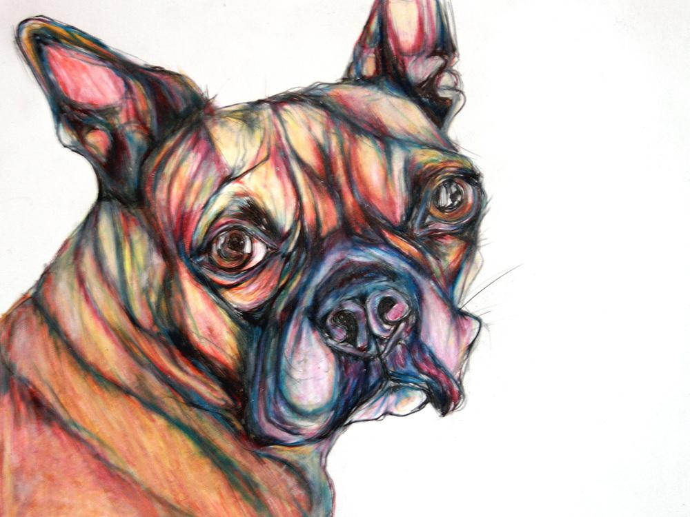 buster-dog.jpg