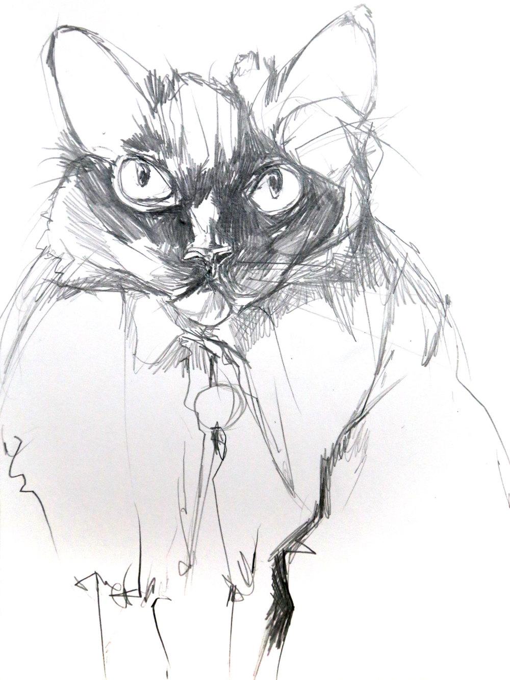 cat-bw.jpg