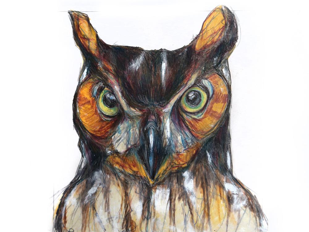 horned-owl.jpg