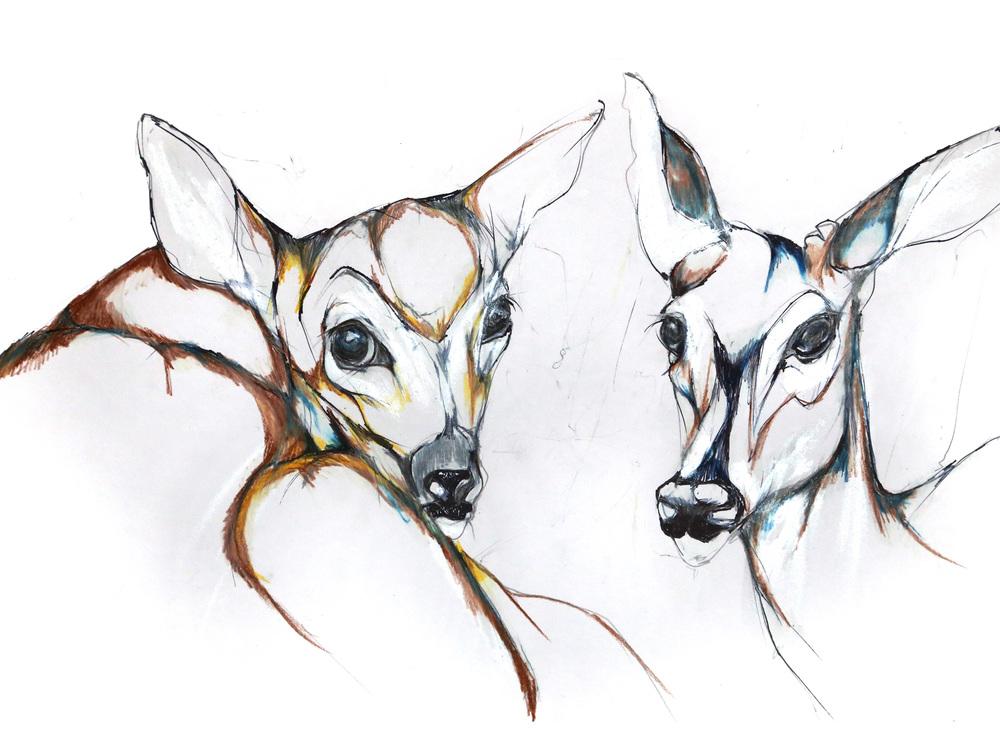 baby-deer-2.jpg