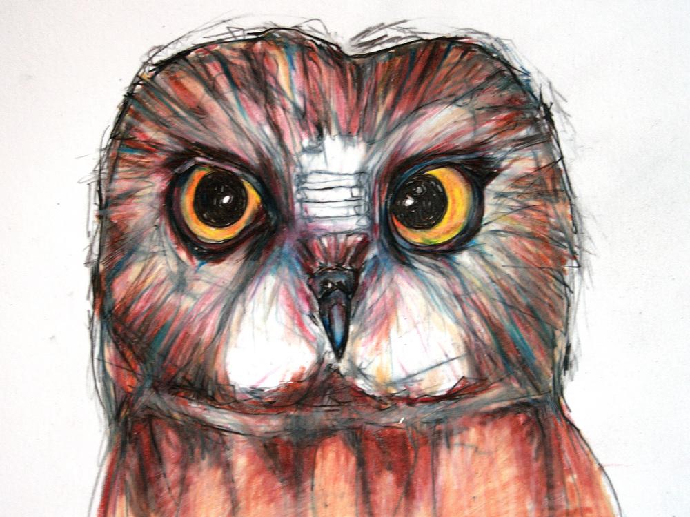 sowwhet-owl.jpg