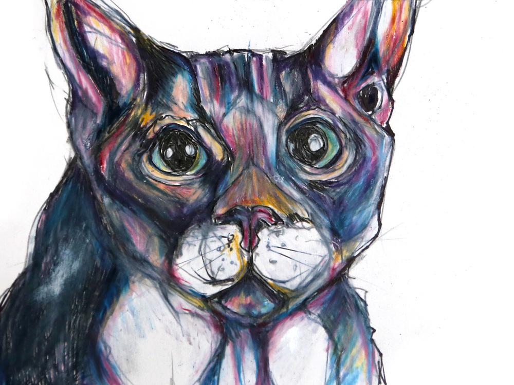 domestic-cat.jpg