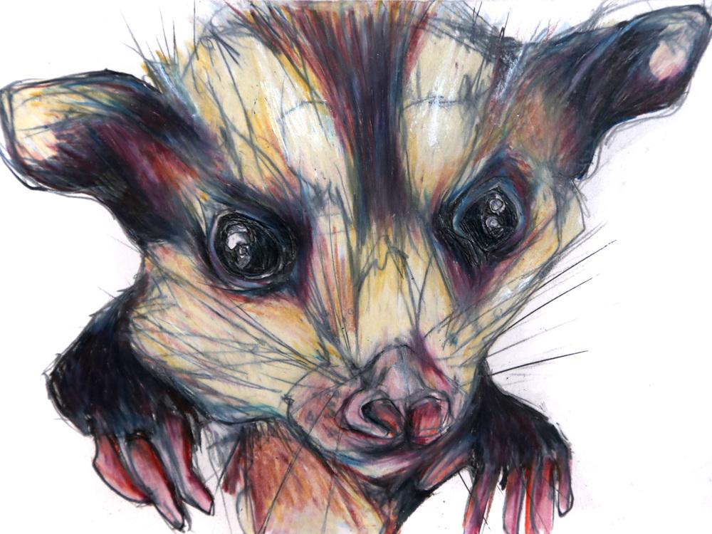 opossum-baby.jpg