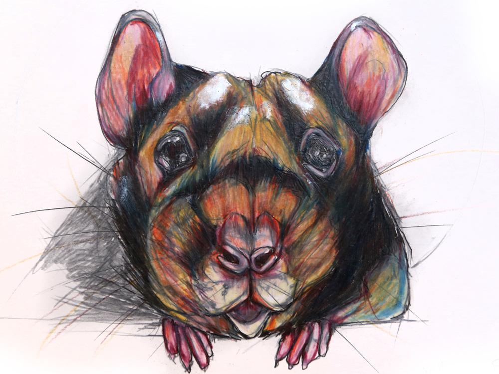 mouse-3.jpg