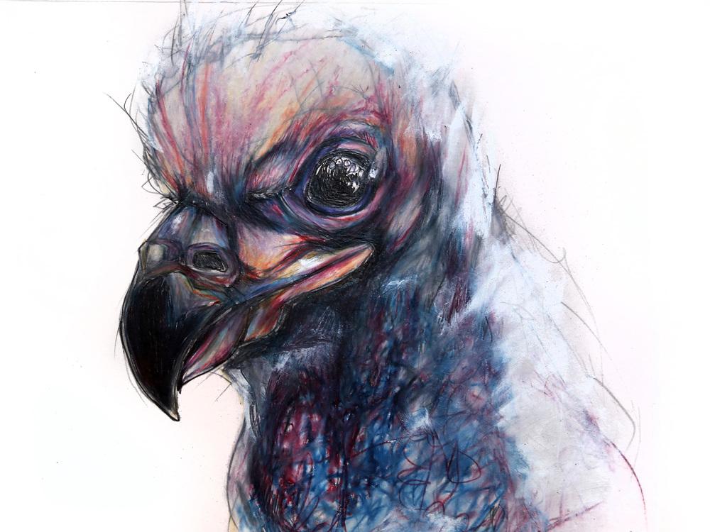 baby-bald-eagle.jpg