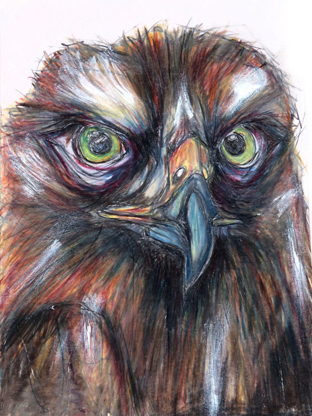 owl-4.jpg