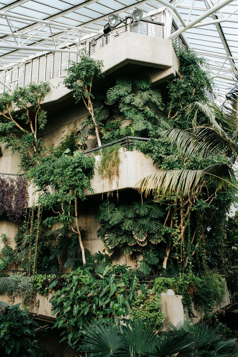 Wide photograph of stunning, tropical plants on display at barbican centre wedding venue