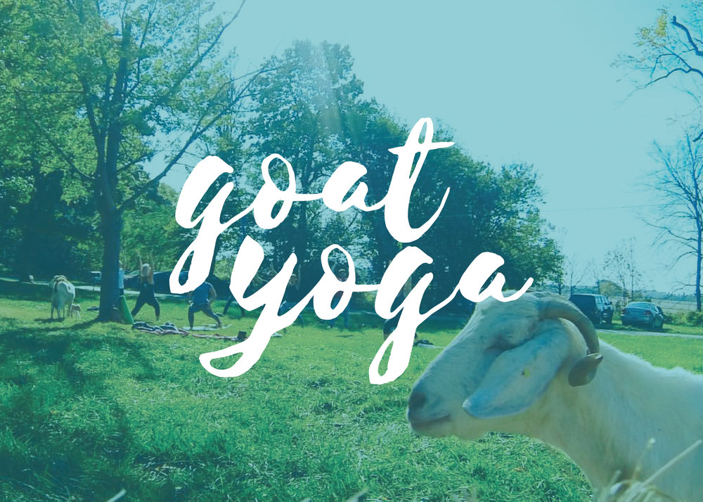 goat-yoga-class-columbus