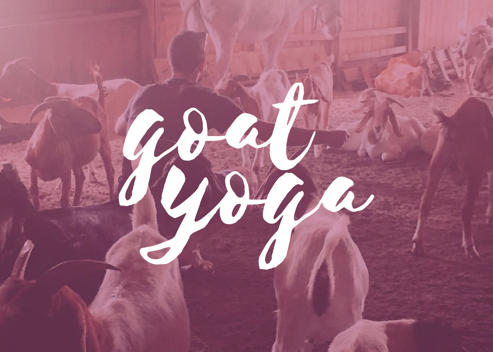 columbus-ohio-goat-yoga-vinyasa-