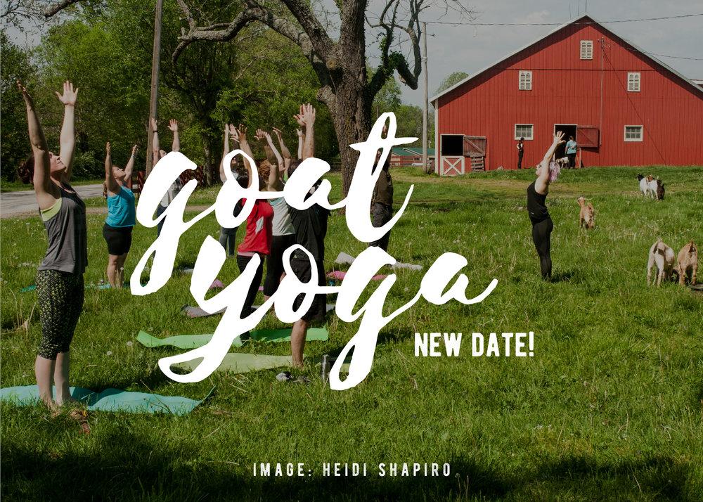 Goat Yoga Banner-01.jpg
