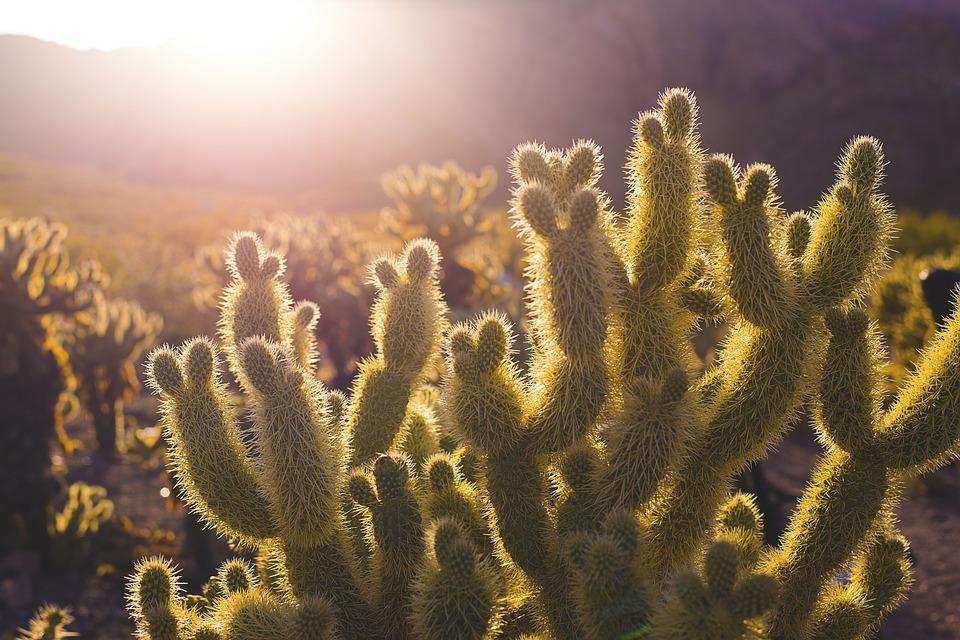 cactus-731125_960_720.jpg