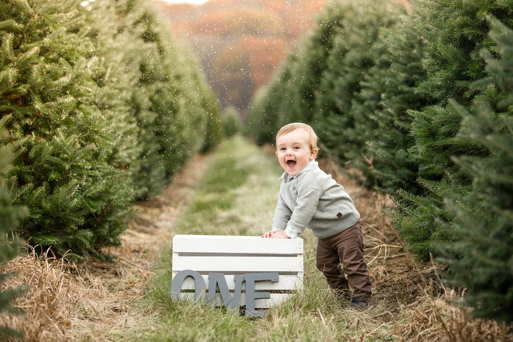 christmas tree farm pittsburgh, lake forest gardens, zelienople family photographer, cranberry township family photographer, christmas family photos pittsburgh