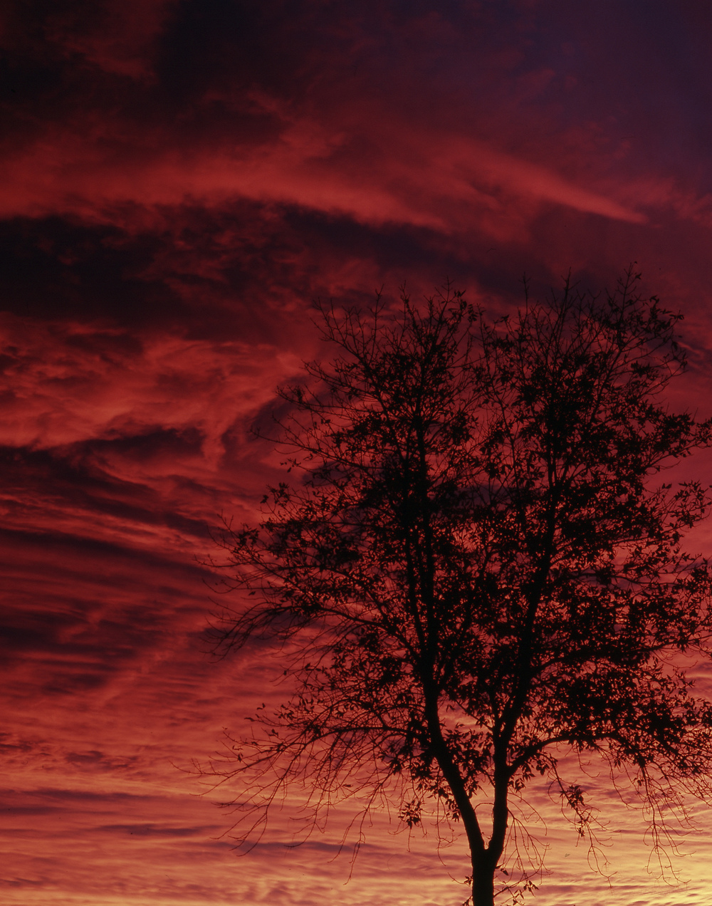 Blood Sunset Tree 2 big.jpg