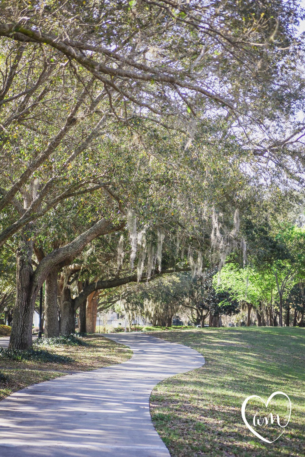 Perfect spot for bride and groom portraits at Cypress Grove Park