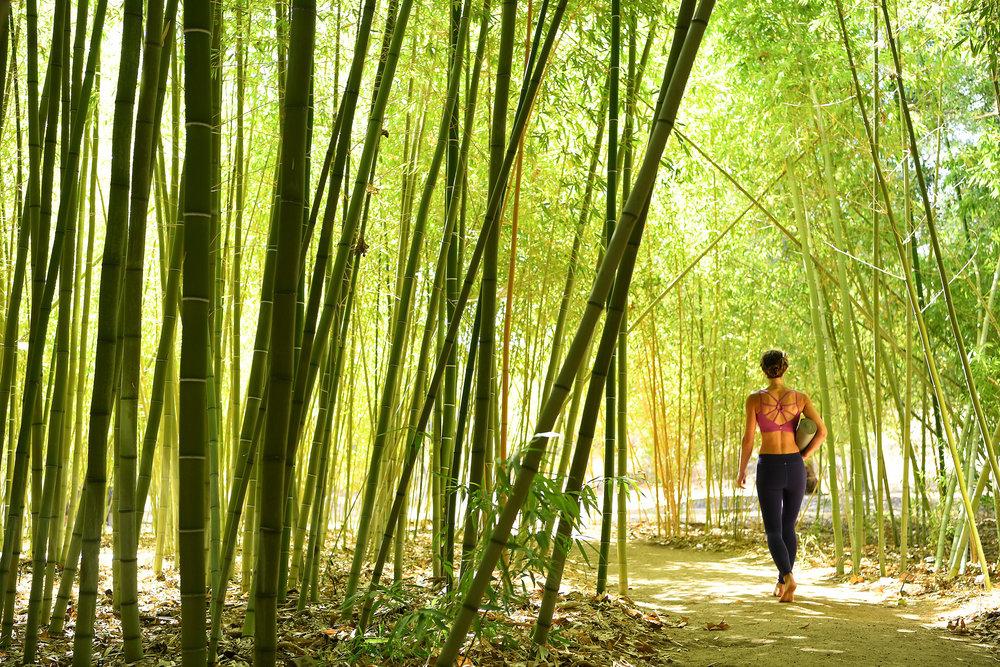 Bamboo-Gallery.jpg