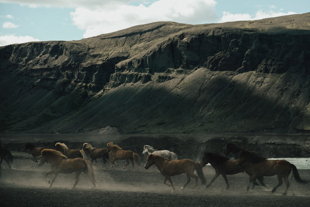 Found some the herds of the Icelandic pony's inland a bit on the south side of the island.