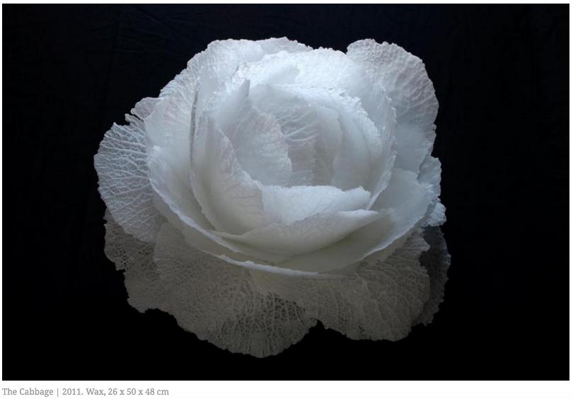 The Cabbage Mona Oren .jpg