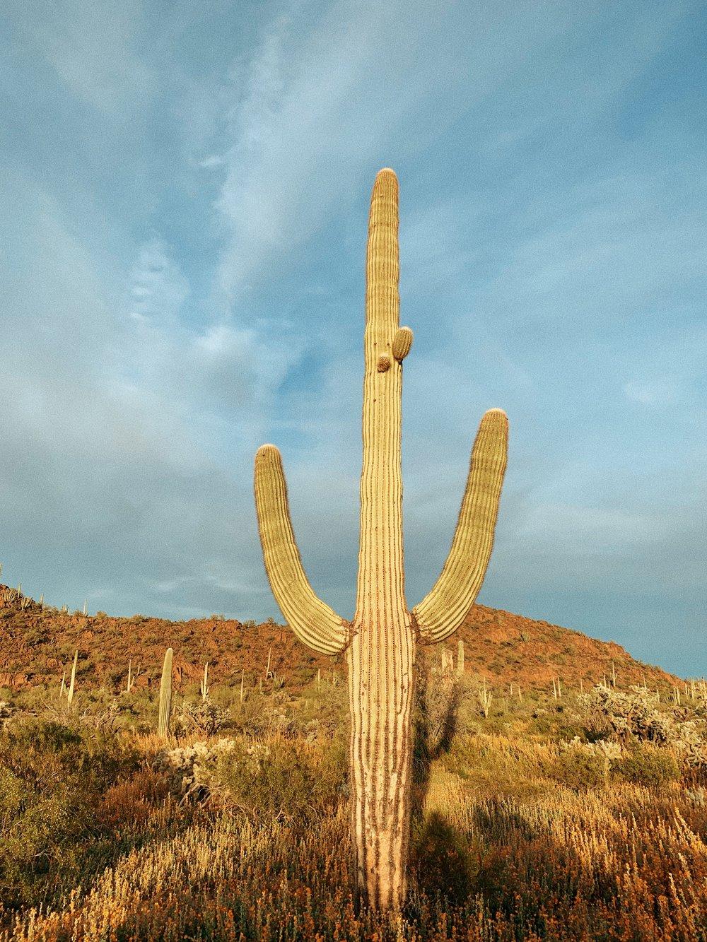 saguaro cactus, tohono o'odam nation, 2019