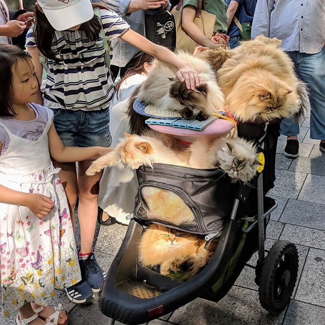 Dude just dropped cart of cats for people to enjoy while they shopped. #japan #catsofinstagram