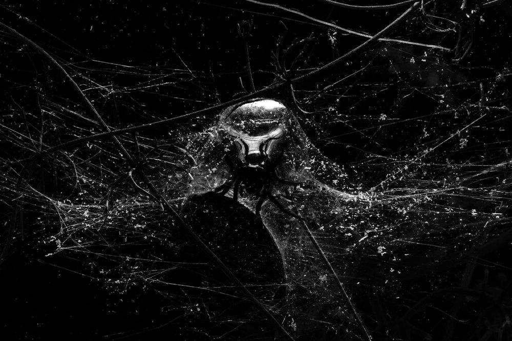 00_Spiders_Underwater_00323-3-1920x1280.jpg