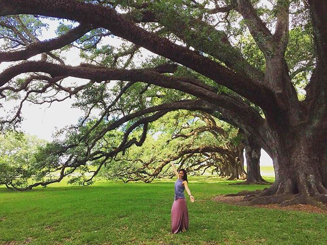 The oak trees at the Oak Plantation is amazing!  #nola #neworleans #louisiana #oakplantation #travelphotography #traveller #travel #vacation #wanderlust #photography #quickpixsf #oaktrees