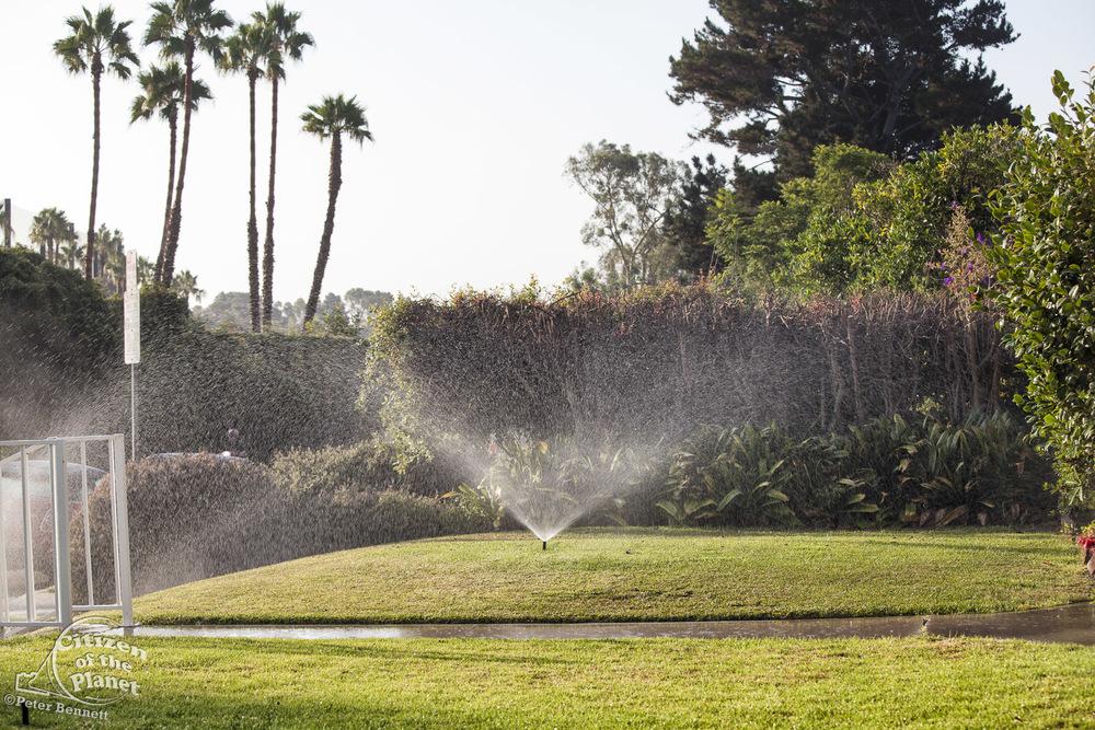 US_CA_42_523_lawn_watering.jpg