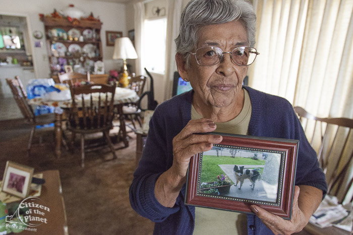 Vicki Yorba, 95, shows a photo of her front lawn in better times.