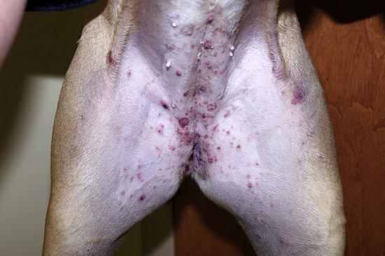 papules, pustules, or pimples — canine skin solutions, Skeleton