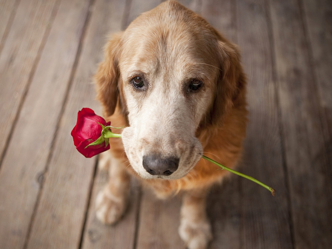 Dogs-Love-Flowers-Wallpaper-HD-175.jpg?format=1500w