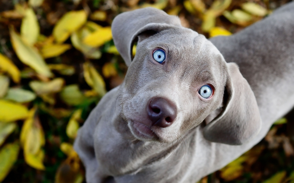 adorable-grey-dog-graphic.jpg