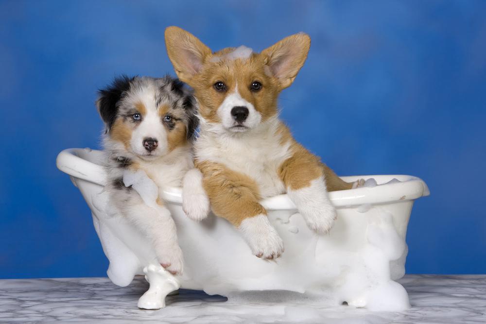 dog_bath.jpg