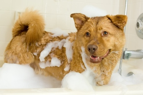 dog-bath1.jpg