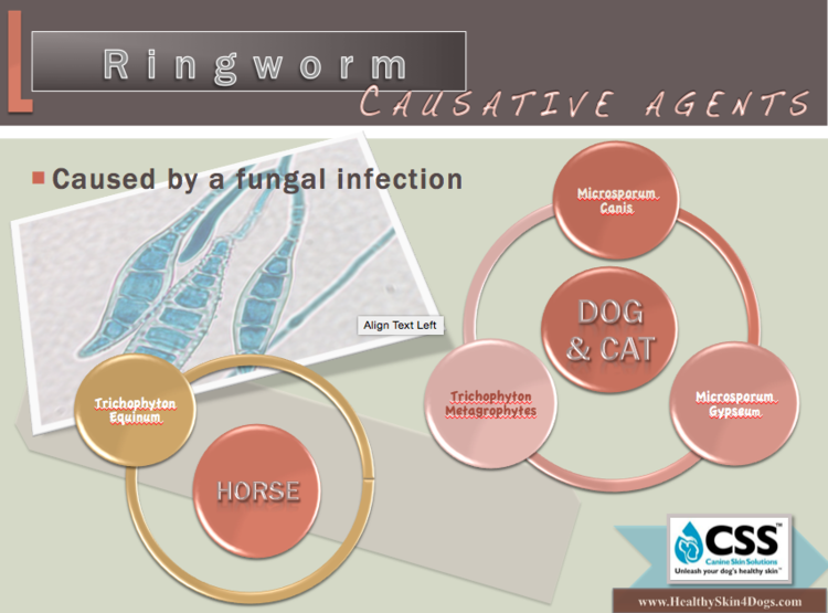 Ringworm fungal infection dermatophytosis canine skin solutions ringworm fungal infection dermatophytosis ccuart Images