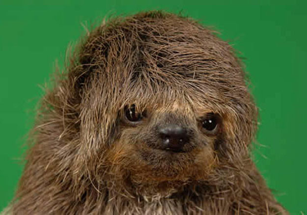 This sloth kind of feels like you should update your blog more frequently.Photo Title