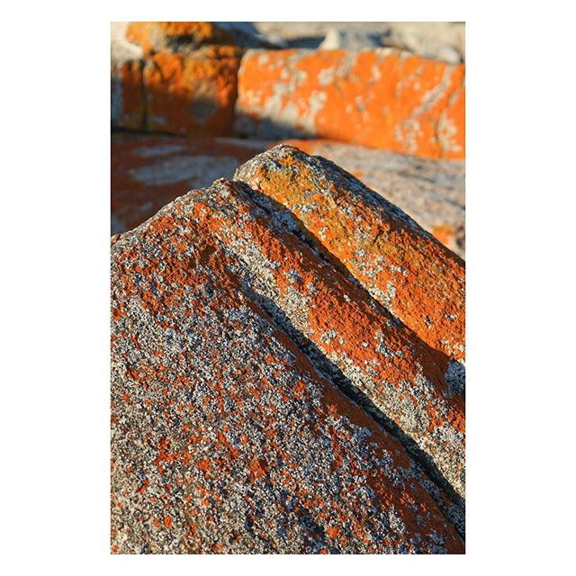 C A L O P L A C A⠀M A R I N A ⠀⠀⠀⠀⠀⠀⠀ ⠀⠀⠀⠀⠀⠀⠀⠀⠀⠀⠀⠀ ⠀⠀⠀⠀⠀⠀⠀⠀⠀⠀⠀⠀⠀⠀⠀⠀⠀⠀⠀⠀⠀⠀⠀⠀ ⠀⠀⠀⠀⠀⠀⠀⠀⠀⠀⠀⠀ ⠀⠀⠀⠀⠀⠀⠀⠀⠀⠀⠀⠀ ⠀⠀⠀⠀⠀⠀⠀⠀⠀⠀⠀⠀ ⠀⠀⠀⠀⠀⠀⠀⠀⠀⠀⠀⠀ ⠀⠀⠀⠀⠀⠀⠀⠀⠀⠀⠀⠀ ⠀⠀⠀⠀⠀⠀⠀⠀⠀⠀⠀⠀ #bayoffires #marina #orange #rocks #all_sunsets #geology #stones #ocean #scenicsunset  #australia #seeaustralia #australiagram #ig_australia #exploreaustralia #discoveraustralia #aussie #aussiephotos #igersaustralia #sony #sonyalpha #sonyimages #zeiss #sonyphotography #sonya7 #sonyalphasclub #mirrorless #mirrorlesscamera #sonya7riiI #A7R3 @tasmania @tasmanianwilderness @tasmaniagram @beautyoftasmania @australia