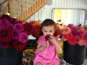 My daugher, Priya, smelling Dahlias freshly picked from the field.