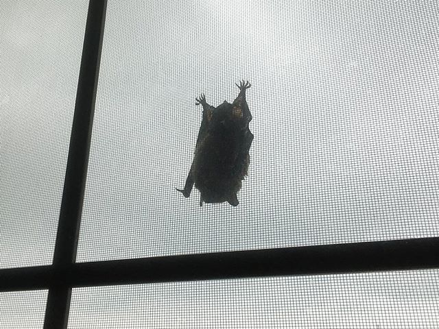 A #spooky friend payed us a visit today. #bat #halloween
