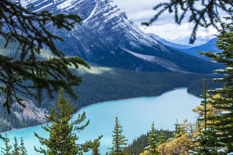 Peyto Lake, Canadian Rockies as seen on Sept 19, 2016 11a.m. Extraordinary color in the glacial run-off.