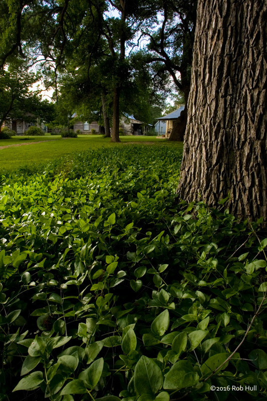 This image uses hyperfocal to help illustrate the lush grounds of a Texas bed and breakfast.